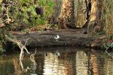 Bird Sanctuary.jpg