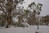 Snow trees_6610.jpg