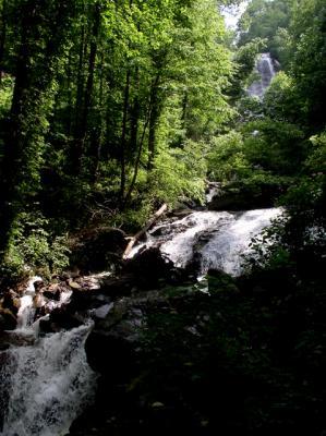 Along the trail to Amicalola Falls