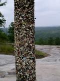 Gum pole on the trail up Stone Mountain