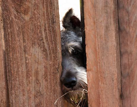 neighbors dog.jpg