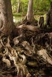 woody tangle.jpg
