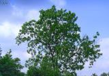 i like this tree