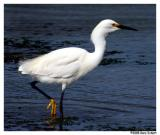 California: Birds and Animals