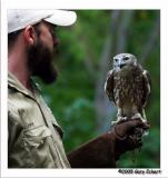 Barking Owl