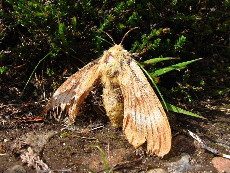 Battered Moth