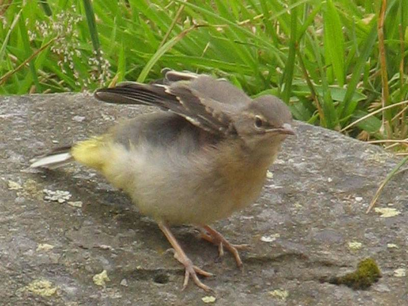 Fledgling Stretches its wings