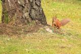 Squirrel at bottom of tree
