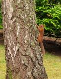 one paw Squirrel