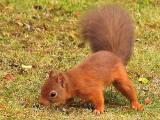 Squirrel bottom of feeder