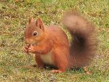 Squirrel bottom of feeder1