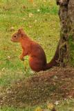 Squirrel bottom of tree