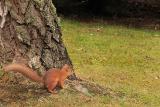Squirrel at tree