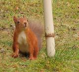 Squirrel ready for up