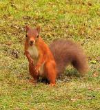Squirrel with nut mouth