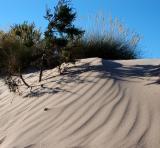 Dune - Algairens