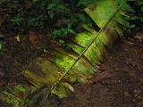 palm leaf decaying