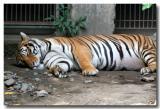 23 May 2005 - Manila Zoo