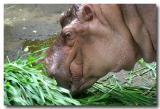 23 May 2005 - Hungry Hungy Hippo