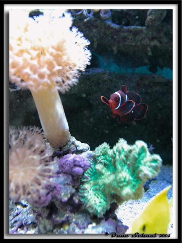 22 Aug - Can You Find Nemo?
