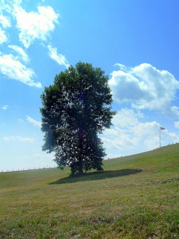 A TREE A FLAG