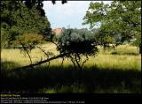 Aalholm Skov 20040829 0002 PS web.jpg