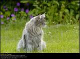 DSC3134 PS web.jpg