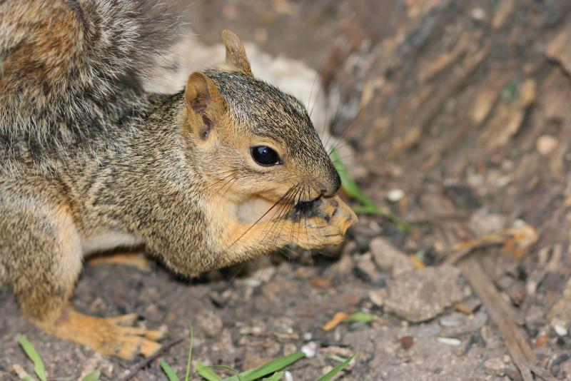 Squirrel-1020-large