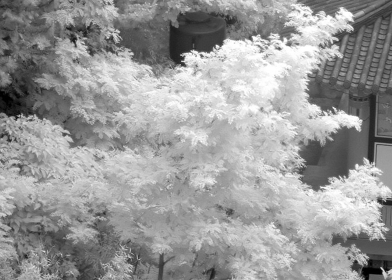 Infrared crope
