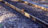 A squirrel crossing the railway... safely !