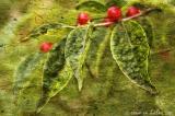 leaves & berries
