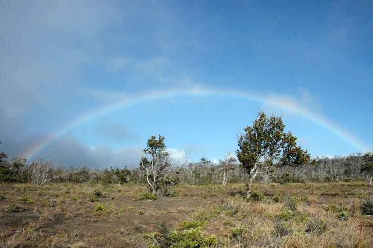 Trees and Rainbow