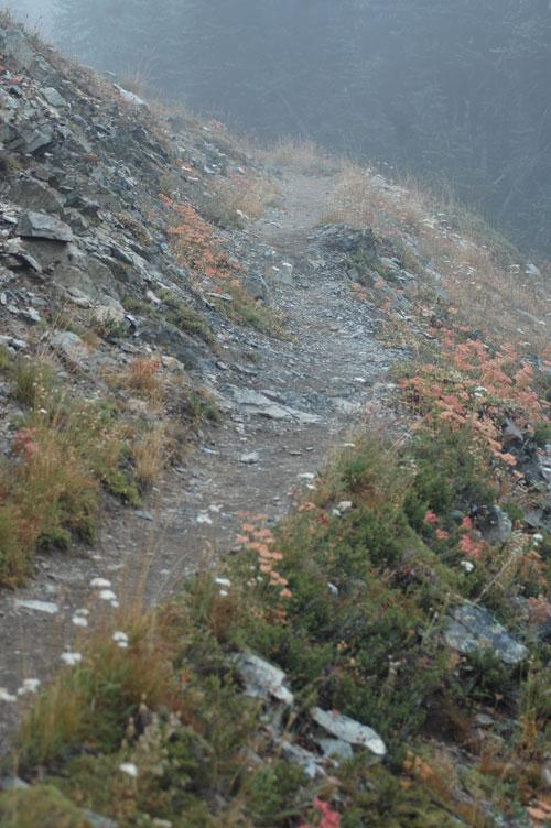 Trail Curving