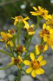 antsonflowers.jpg