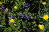 A Few More Flowers