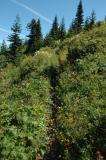 Ascending Trail