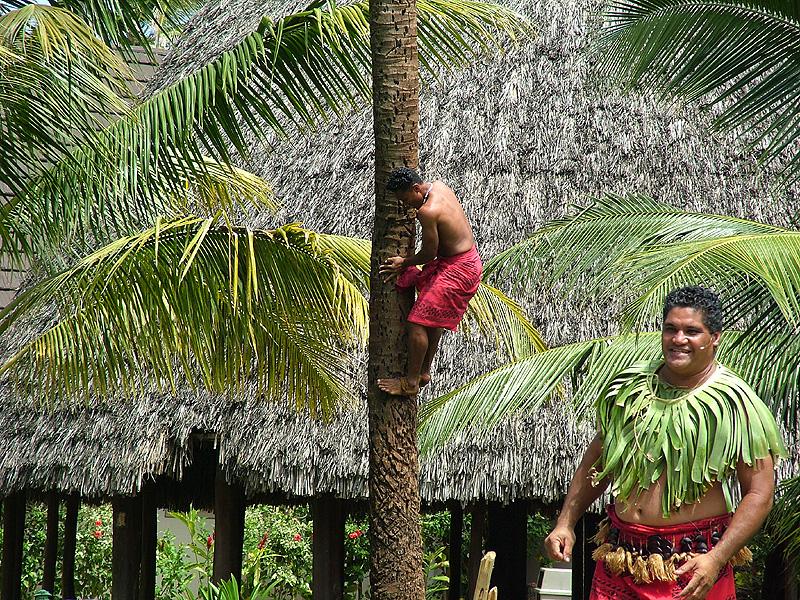 Tree climbing at the Samoan village