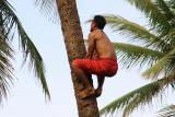 Professsional Tree Climber