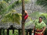 Tree climbing at the Samoan village