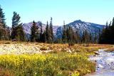 Conrad Creek landscape