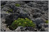 Rock Greenery