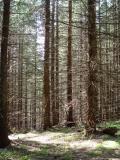 Las pod Starą Stają (DSC04134.JPG)