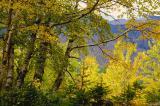 Fall in Montana - 2004
