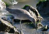 shorebird3.jpg