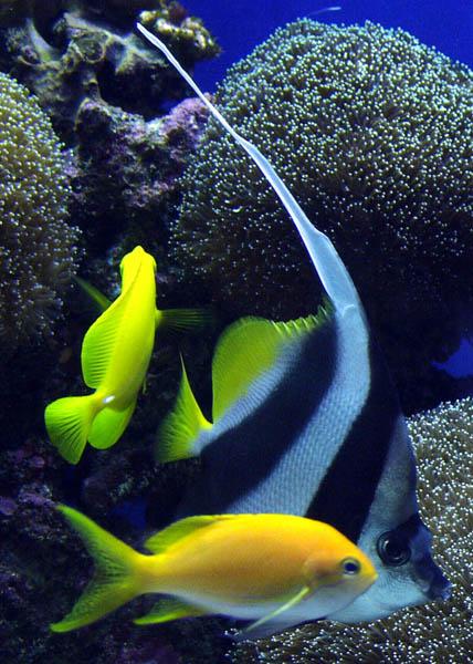 ex brite fish buddies.jpg