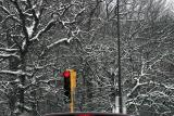 ex red light green arrow tree branches covered with snow 2097.jpg