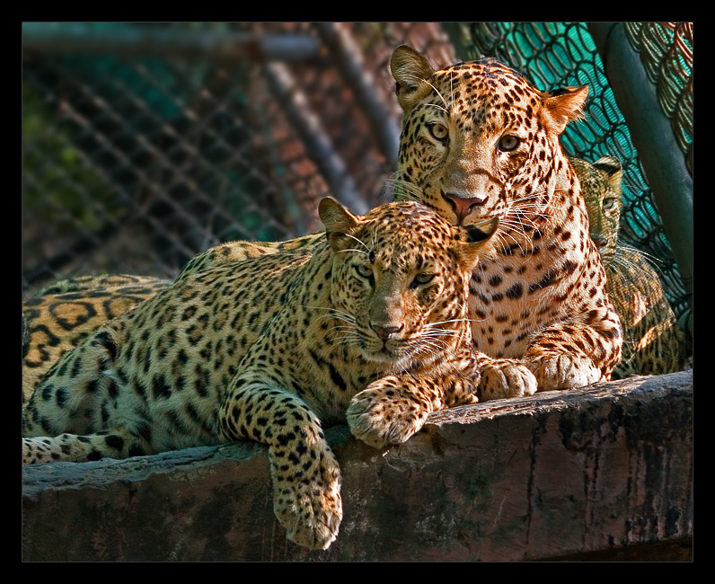 Leopards 2 Oct 05