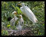 Egret Family Aug05