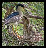 Heron Family Aug05