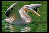 Pelican 2 Sep 05